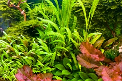 Plants decor for betta tank