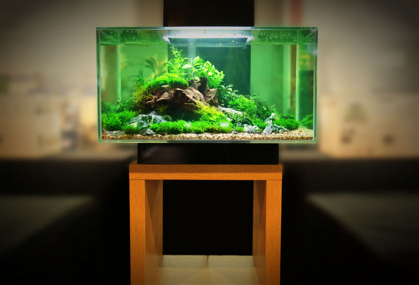 Betta Fish Tank Setup - Introduction