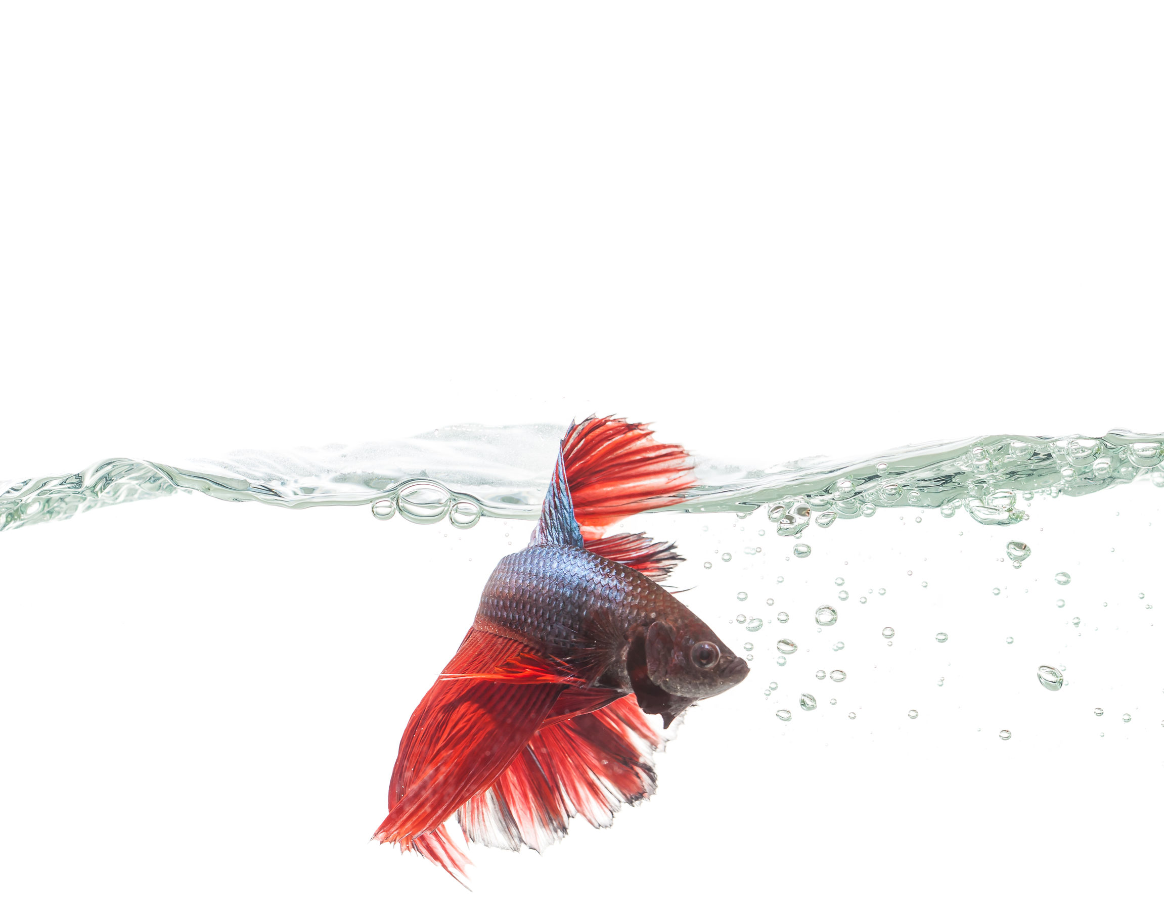 Water Quality for your Betta's Health